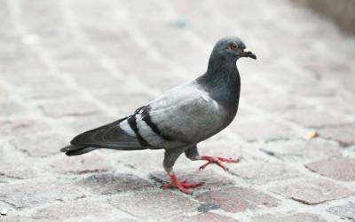 Bird Control Removal