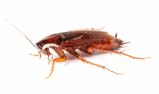 how to tell a beetle from a cockroach